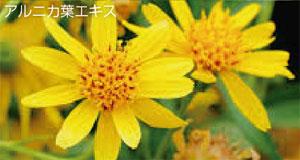 アルニカ花エキス